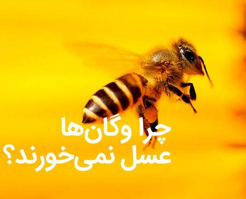 چرا وگان ها عسل نمی خورند؟