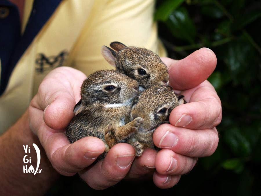 چرا نباید به نوزاد حیوانات دست بزنیم؟